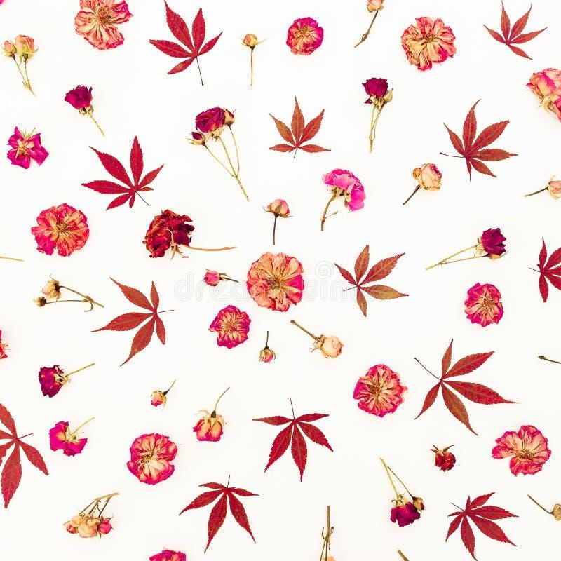 Цветочный узор листьев красного цвета и высушенных роз с бутонами на белой предпосылке Плоское положение, взгляд сверху стоковая фотография rf