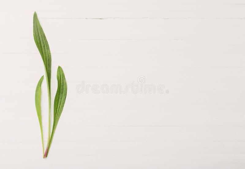Цветочный узор на белой деревянной предпосылке стоковые фото