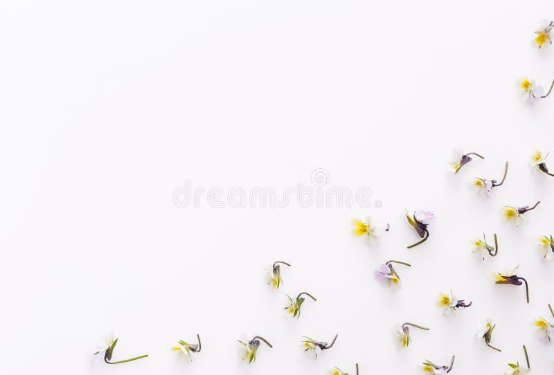Цветочный узор на белой предпосылке, небольшие белые желтые цветки стоковые изображения rf