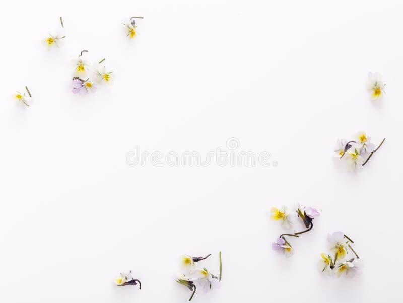 Цветочный узор на белой предпосылке, небольшие белые желтые цветки стоковые фотографии rf