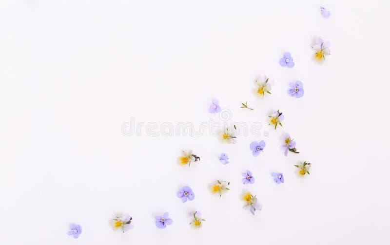 Цветочный узор на белой предпосылке, небольшие белые желтые цветки стоковые фото