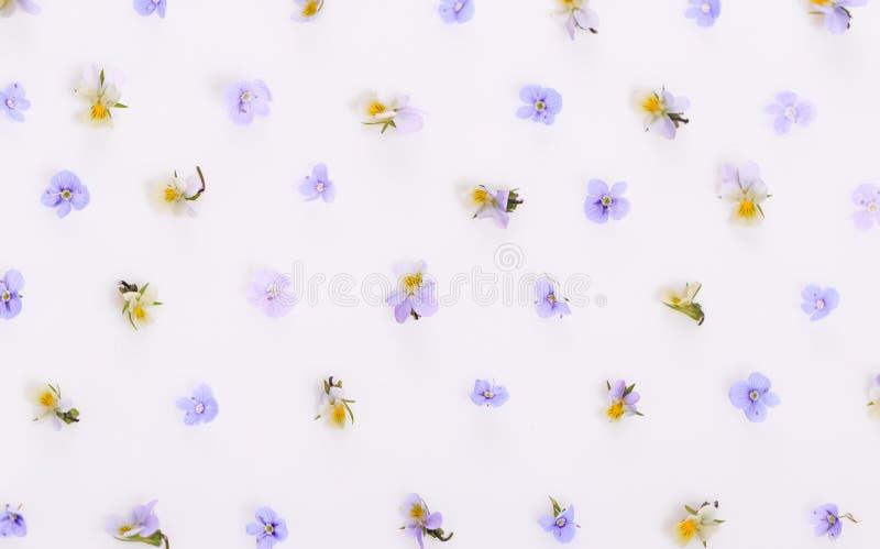 Цветочный узор на белой предпосылке, небольшие белые желтые цветки стоковые изображения
