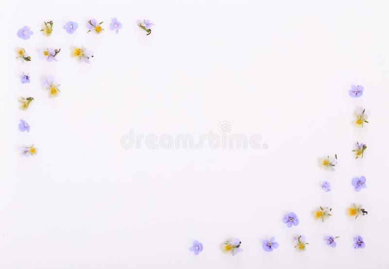 Цветочный узор на белой предпосылке, небольшие белые желтые цветки стоковая фотография