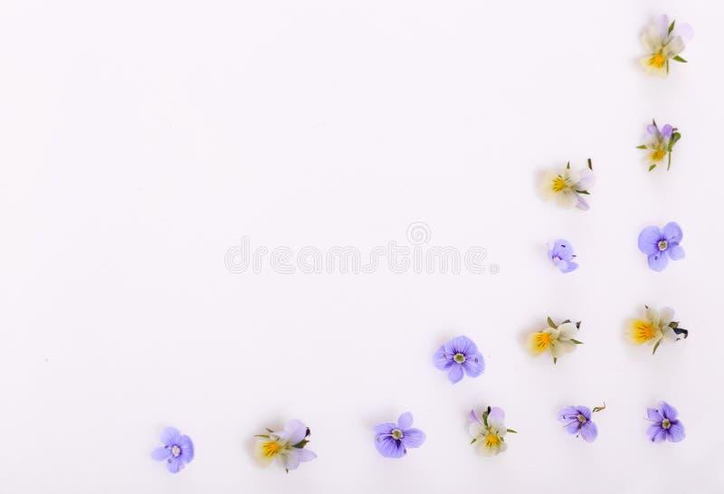 Цветочный узор на белой предпосылке, небольшие белые желтые цветки стоковая фотография rf