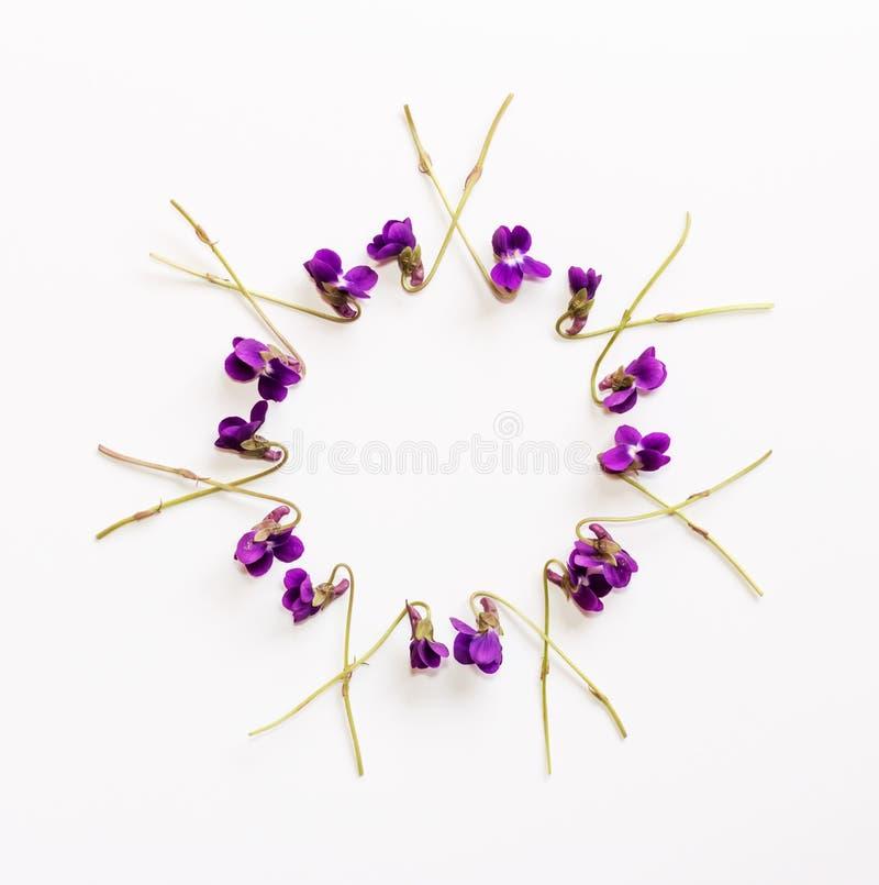 Цветочный узор от малого душистого леса цветет фиолеты с космосом для текста на белой предпосылке стоковая фотография