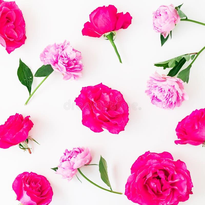 Цветочный узор пиона цветет, розовые розы и листья на белой предпосылке Плоское положение, взгляд сверху стоковая фотография