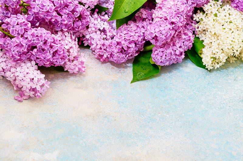 Цветочный узор розовых ветвей сирени, предпосылка цветков o стоковая фотография