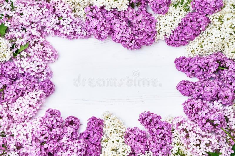 Цветочный узор розовых ветвей сирени, предпосылка цветков o стоковое изображение