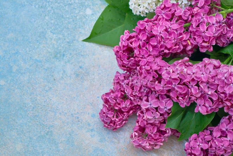 Цветочный узор розовых ветвей сирени, предпосылка цветков o r стоковое изображение rf