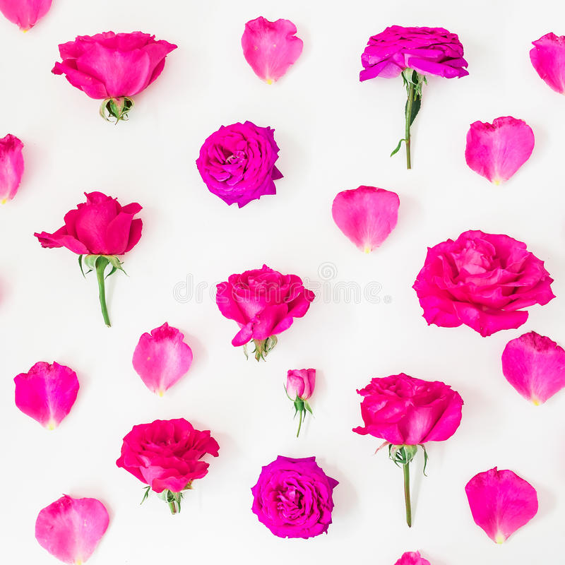 Цветочный узор розовых роз, бутонов и лепестков на белой предпосылке Плоское положение, взгляд сверху стоковое фото