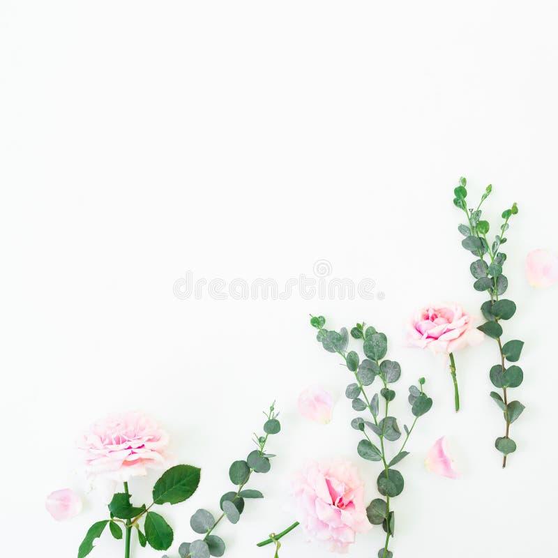 Цветочный узор розовых цветков и ветвей эвкалипта на белой предпосылке Плоское положение, взгляд сверху красный цвет поднял стоковые изображения