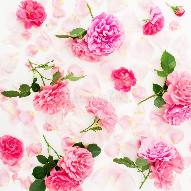 Цветочный узор розовых цветков роз на белой предпосылке r стоковое изображение