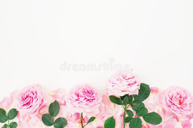 Цветочный узор розы, листьев и лепестков пинка на белой предпосылке Плоское положение, взгляд сверху стоковое фото