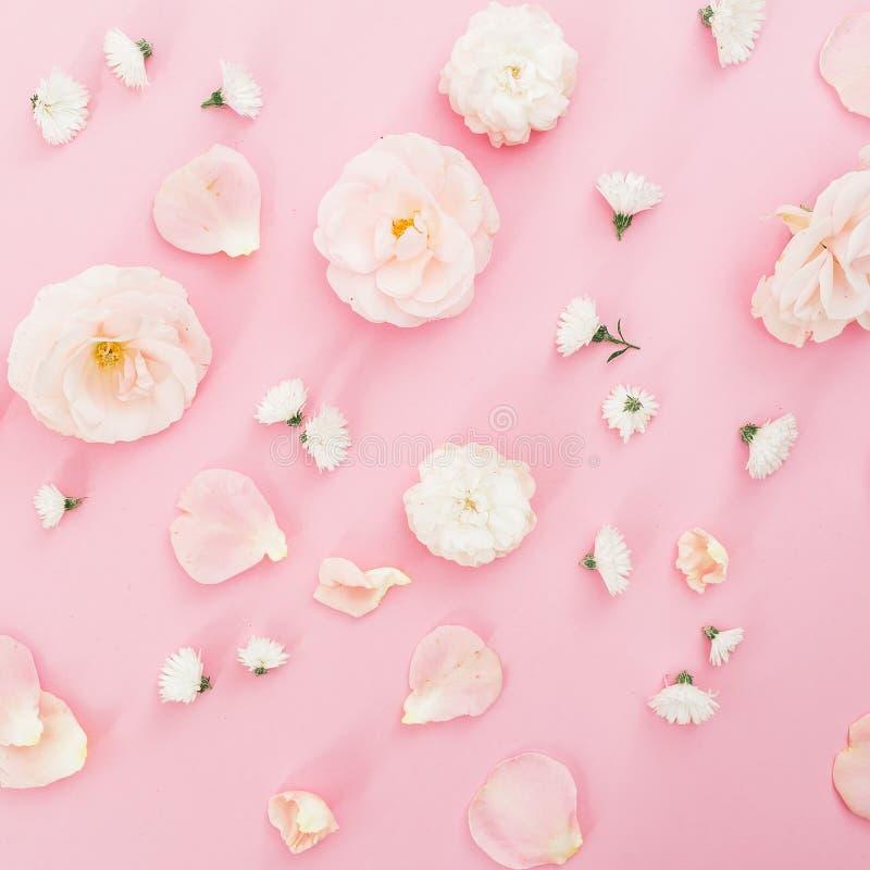 Цветочный узор роз Цветки белых роз изолированные на розовой предпосылке Плоское положение, взгляд сверху стоковое изображение rf