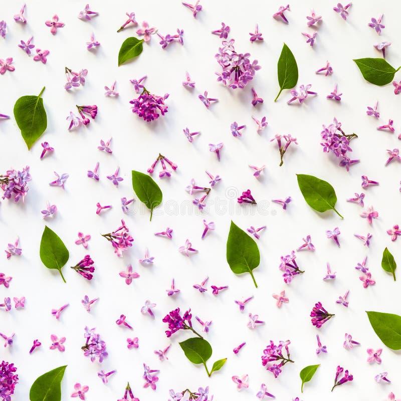 Цветочный узор свежих цветков и листьев сирени на белизне стоковое фото rf