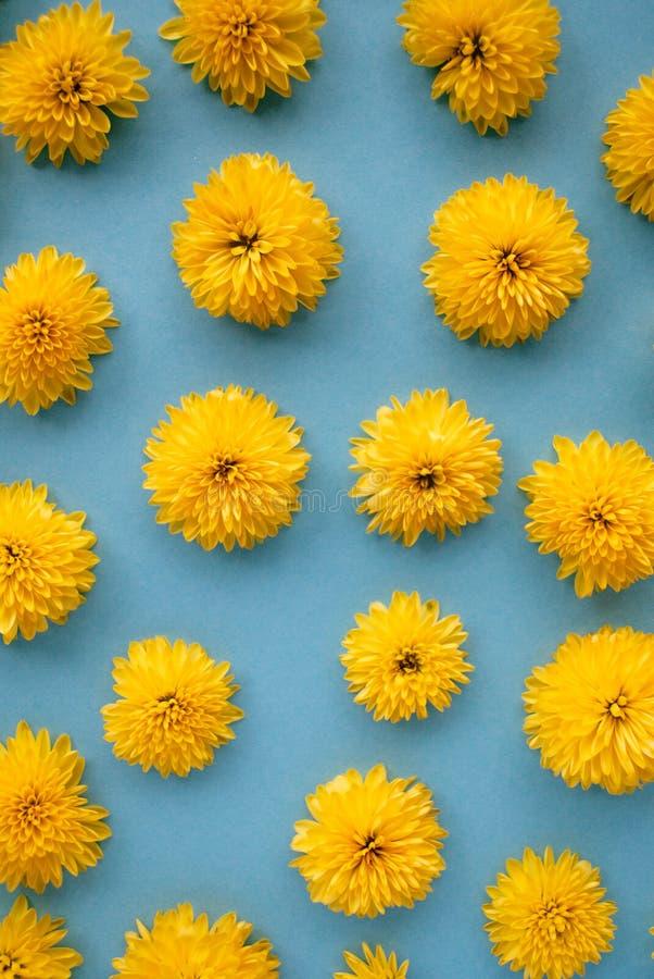 Цветочный узор сделанный желтой хризантемы цветет на голубой предпосылке стоковая фотография rf