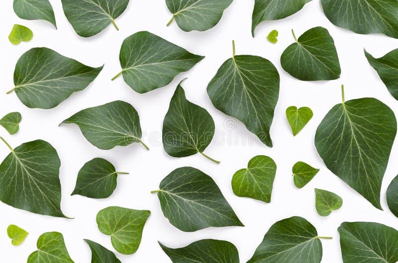 Цветочный узор сделанный зеленого цвета выходит на белую предпосылку Плоское положение, взгляд сверху Текстура картины лист стоковое изображение rf