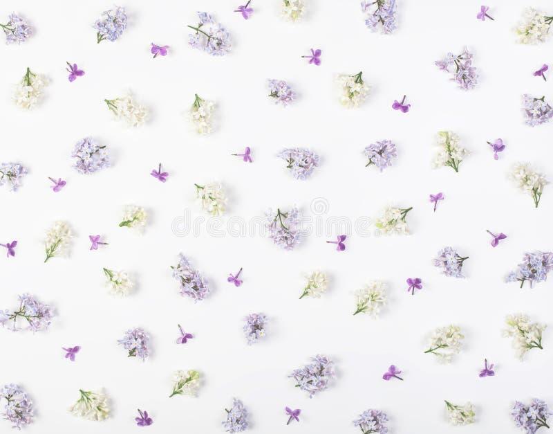 Цветочный узор сделанный из весны белой и фиолетовых изолированных цветков сирени на белой предпосылке Плоское положение стоковые изображения