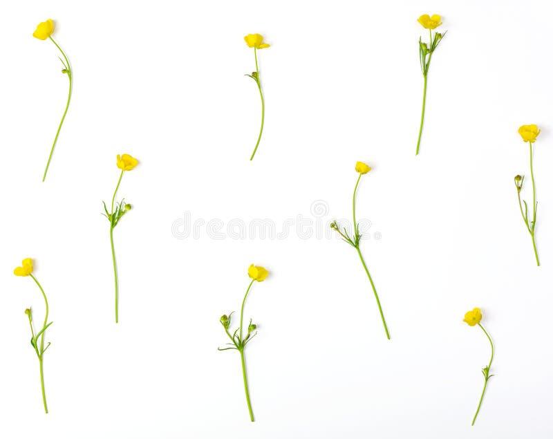 Цветочный узор сделанный из желтых изолированных цветков лютиков на белой предпосылке Плоское положение стоковое изображение rf
