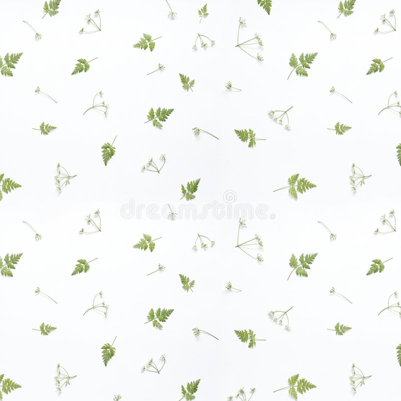 Цветочный узор сделанный из зеленых листьев, ветвей на белой предпосылке o Предпосылка Валентайн Картина цветка стоковые изображения rf