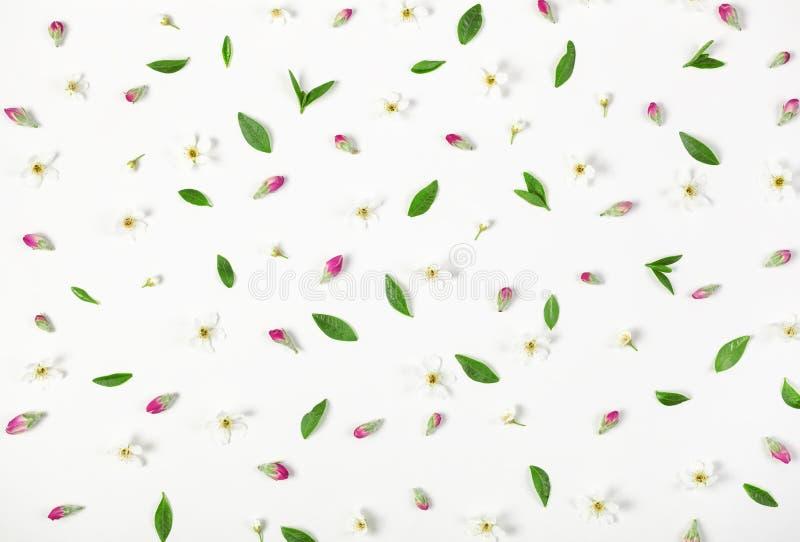 Цветочный узор сделанный из изолированных цветков весны, розовых бутонов и листьев на белой предпосылке Плоское положение стоковая фотография rf
