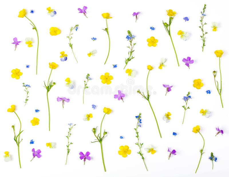Цветочный узор сделанный из изолированных цветков луга на белой предпосылке Плоское положение стоковые изображения rf