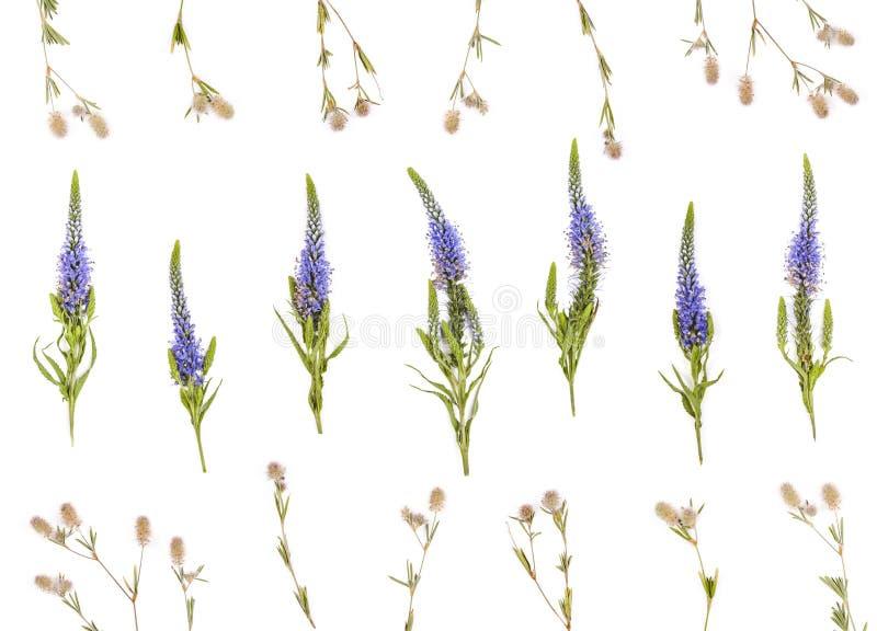 Цветочный узор сделанный из изолированных цветков поля на белой предпосылке Плоское положение стоковые изображения rf