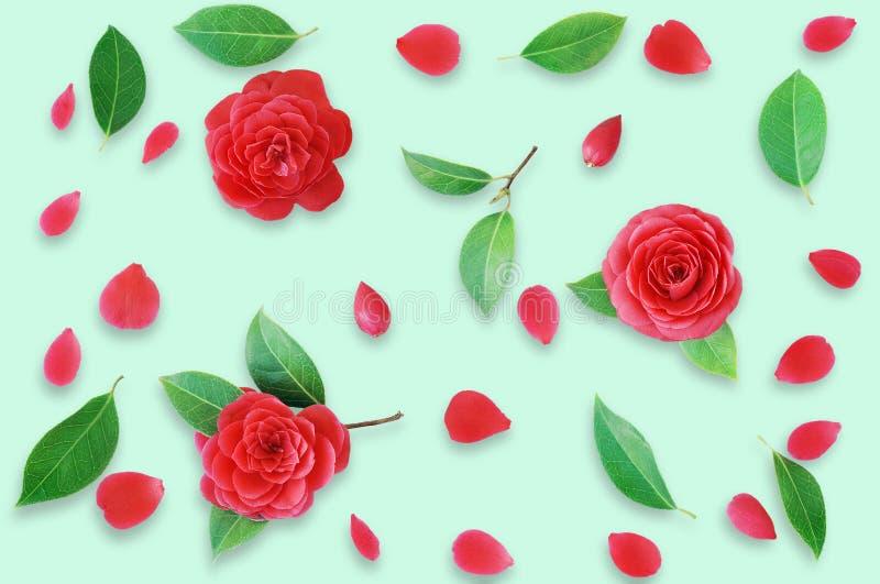 Цветочный узор сделанный из красных камелий и зеленых листьев, branche стоковые изображения