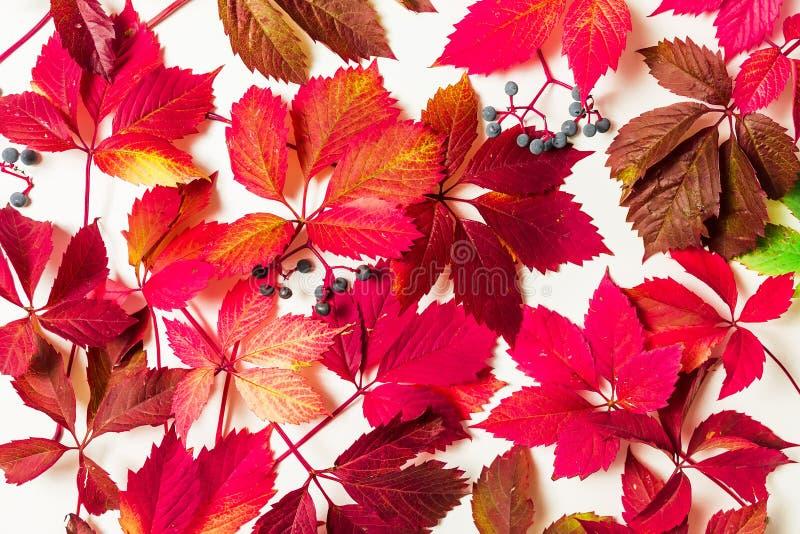 Цветочный узор сделанный из красных листьев осени на белой предпосылке Плоское положение, взгляд сверху стоковое изображение