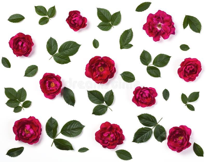 Цветочный узор сделанный из розовых розовых изолированных цветков и зеленых листьев на белой предпосылке r стоковое изображение