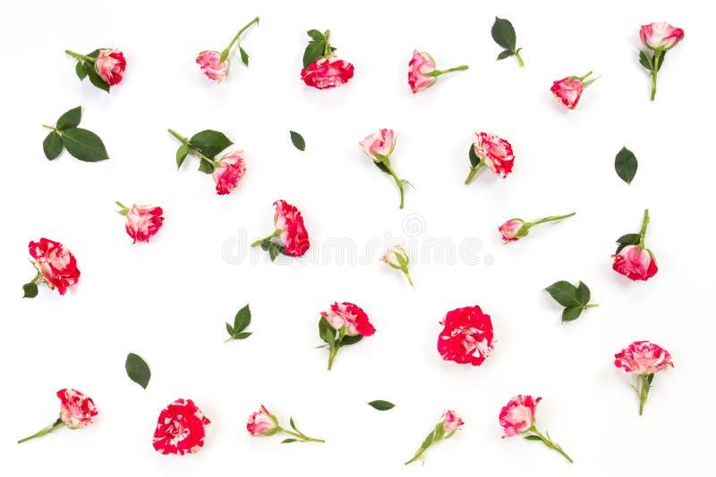 Цветочный узор сделанный из розовых красных роз и листьев зеленого цвета на белой предпосылке стоковое изображение rf
