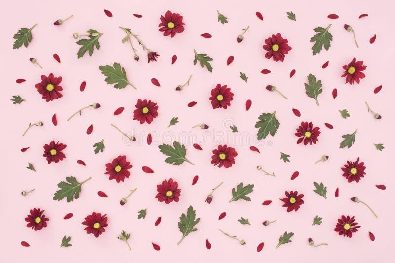 Цветочный узор сделанный красной хризантемы, зеленых листьев на розовой предпосылке o Предпосылка валентинок Сделайте по образцу  стоковое фото