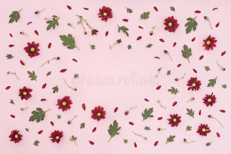 Цветочный узор сделанный красной хризантемы, зеленых листьев на розовой предпосылке o Предпосылка валентинок Сделайте по образцу  стоковые фотографии rf