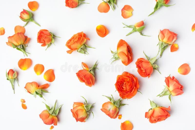 Цветочный узор сделанный оранжевых роз на белой предпосылке o Предпосылка Дня матери r стоковые изображения rf