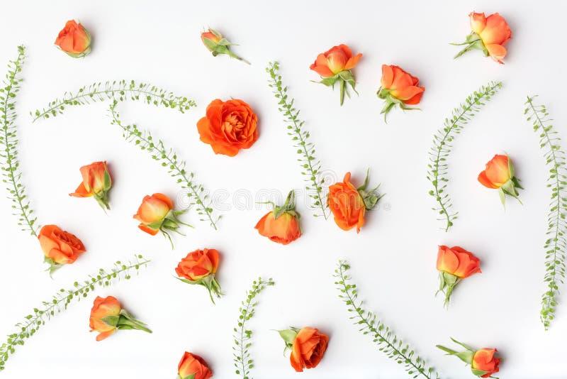 Цветочный узор сделанный оранжевых роз на белой предпосылке o Предпосылка Дня матери r стоковая фотография rf