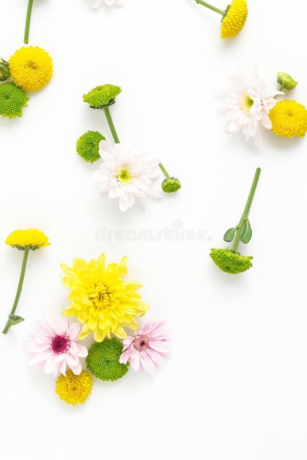 Цветочный узор сделанный различных хризантем на белом backgro стоковое изображение