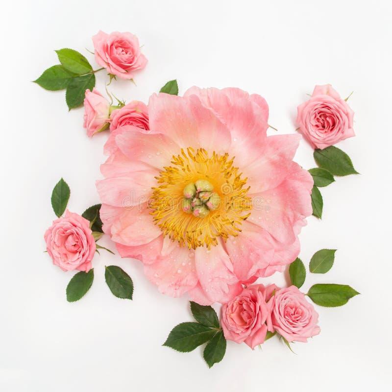 Цветочный узор сделанный розовых роз, зеленых листьев, ветвей на белой предпосылке Плоское положение, взгляд сверху желтый цвет к стоковые фото