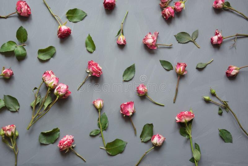 Цветочный узор сделанный розовых роз куста, зеленый цвет выходит на серую предпосылку Плоское положение, взгляд сверху Валентайн  стоковые фотографии rf