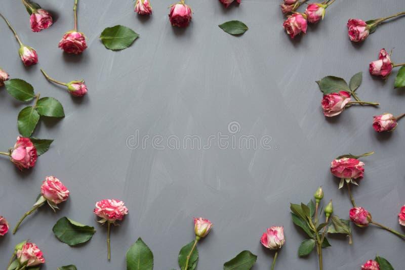 Цветочный узор сделанный розовых роз куста, зеленый цвет выходит на серую предпосылку Плоское положение, взгляд сверху стоковая фотография rf