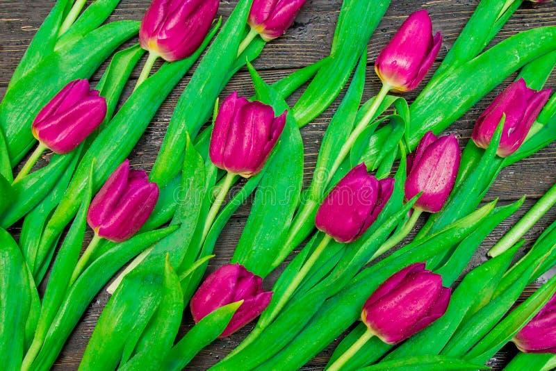 Цветочный узор сделанный темных розовых тюльпанов на черной предпосылке Flatlay, взгляд сверху Валентайн предпосылки s стоковые фотографии rf