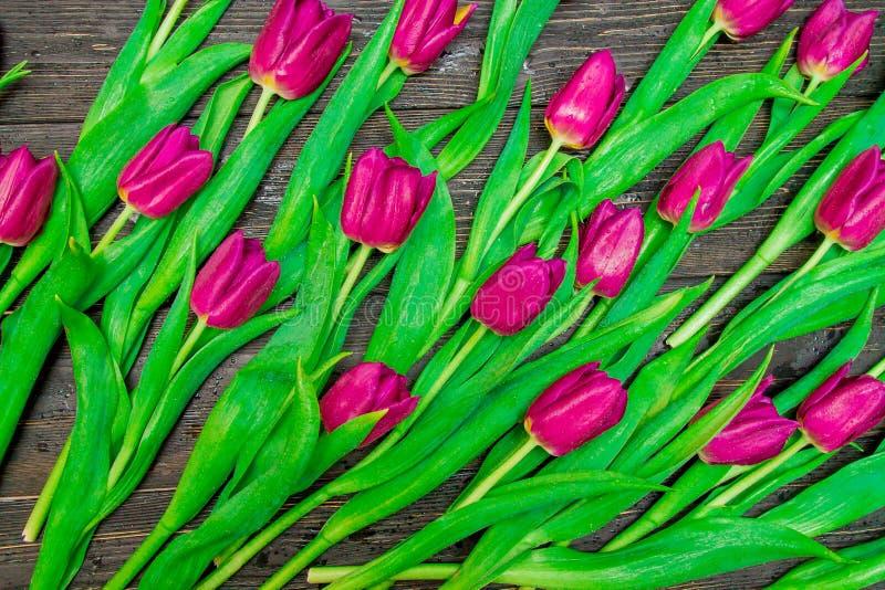 Цветочный узор сделанный темных розовых тюльпанов на черной предпосылке Flatlay, взгляд сверху Валентайн предпосылки s стоковое изображение