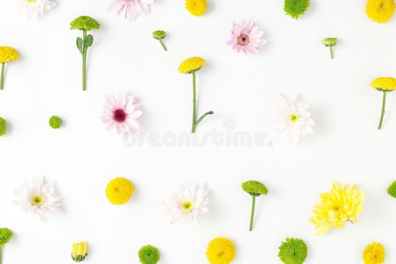 Цветочный узор сделанный хризантем на белой предпосылке плоско стоковые фото