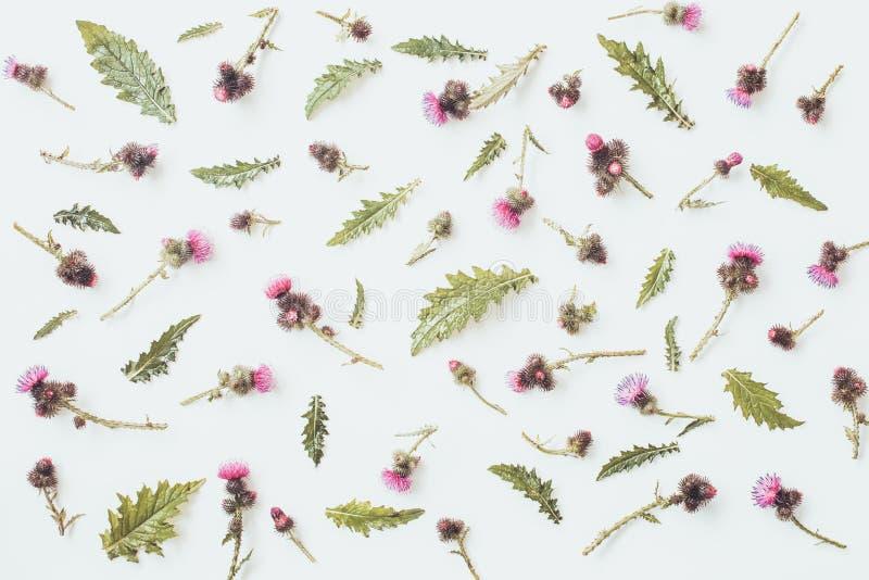 Цветочный узор сделанный thistle с розовыми и фиолетовыми цветками, зелеными листьями, ветвями и терниями на белой предпосылке Пл стоковая фотография