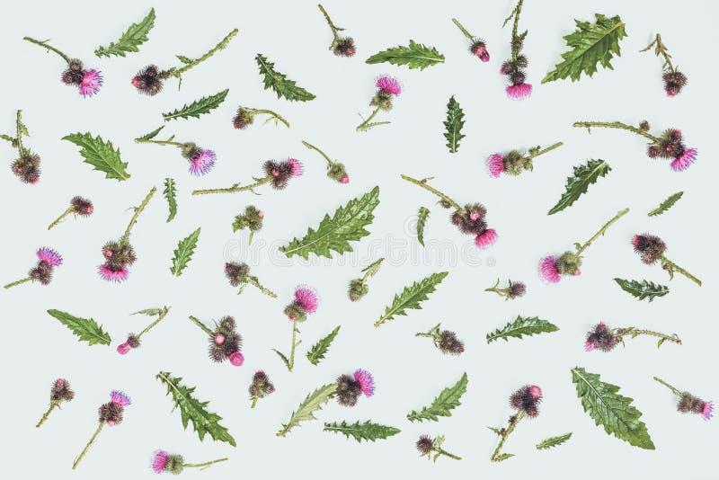 Цветочный узор сделанный thistle с розовыми и фиолетовыми цветками, зелеными листьями, ветвями и терниями на белой предпосылке Пл стоковые фото