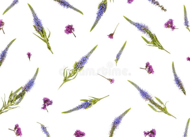 Цветочный узор сделанный veronica цветет на белой предпосылке Плоское положение стоковое изображение rf