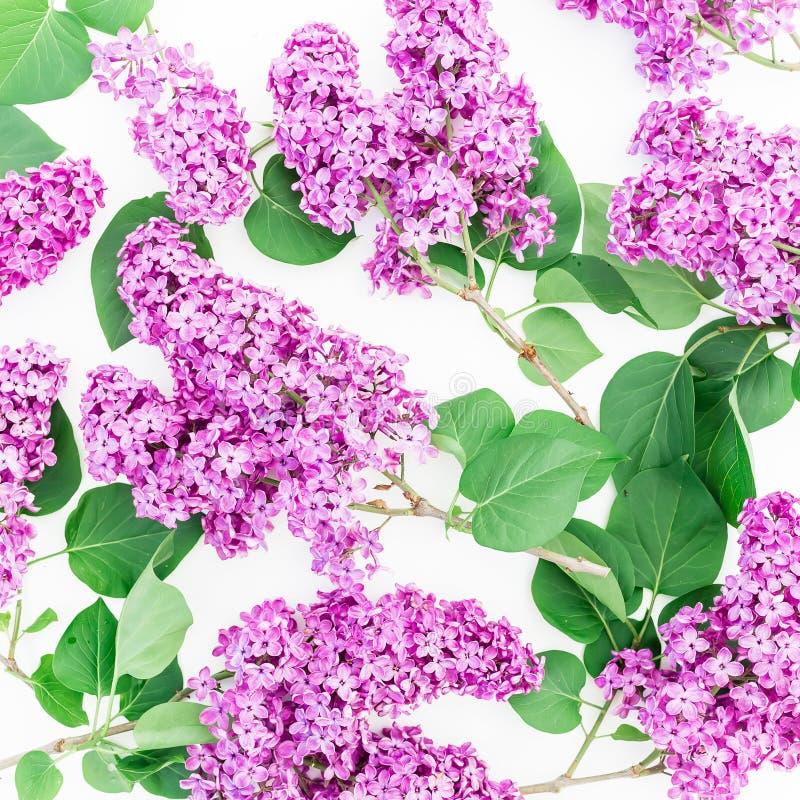 Цветочный узор сирени и листьев на белой предпосылке Плоское положение, взгляд сверху Картина времени весны стоковые изображения