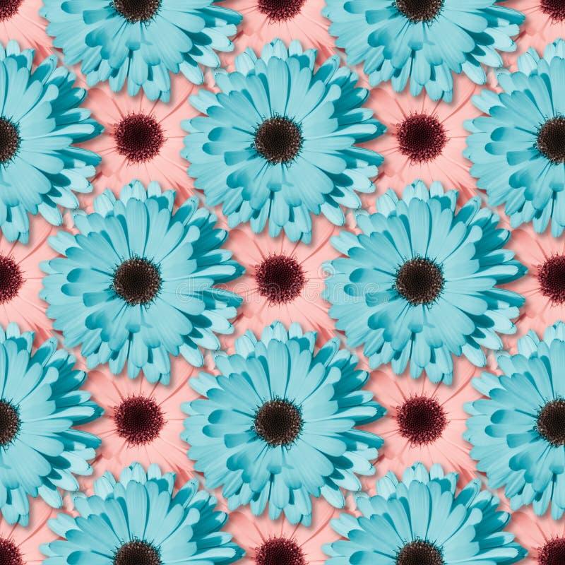Цветочный узор стоцвета или gerbera безшовный стоковые фото