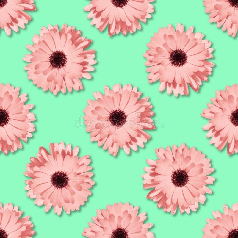 Цветочный узор стоцвета или gerbera безшовный стоковое изображение rf