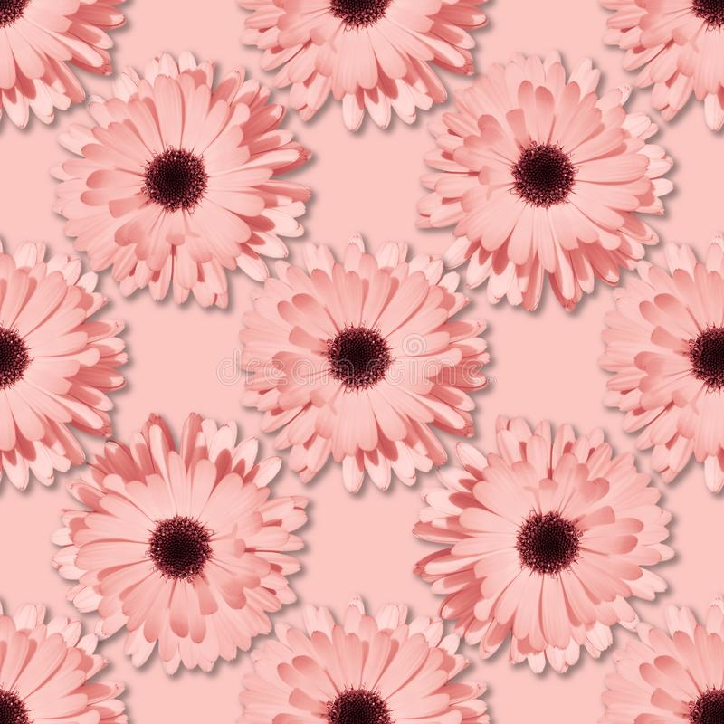 Цветочный узор стоцвета или gerbera безшовный стоковое фото