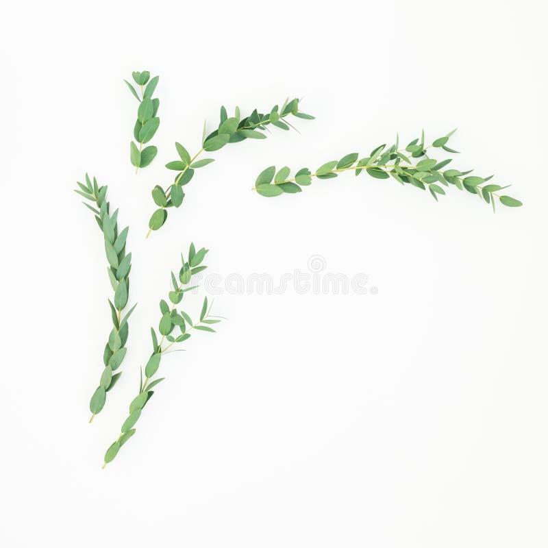 Цветочный узор с ветвями эвкалипта на белой предпосылке r стоковое изображение